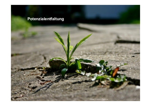 Potenzialentfaltung Picture © berwis | Pixelio.de