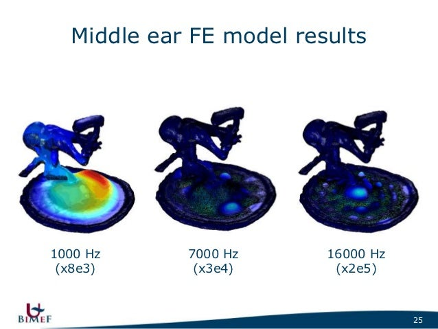 Study of middle ear mechanics at the Lab of Biomedical