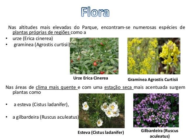 Pode-se visualizar uma grande variedade de vegetação, em conjuntos de árvores taiscomo:• sardoais,• soutos,• carvalhais,• ...