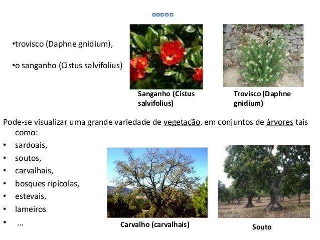 O Parque Natural de Montesinho apresenta uma povoação com cerca de 9 000 habitantesdistribuídos por 92 aldeias.O povoament...