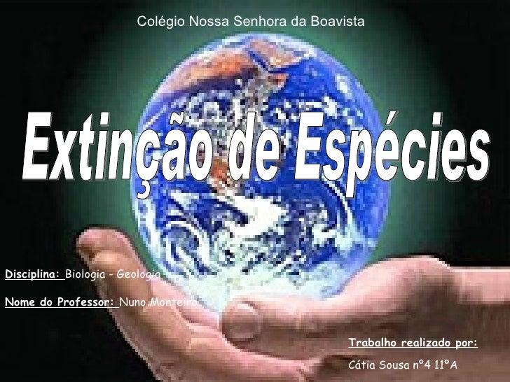 Extinção de Espécies Trabalho realizado por: Cátia Sousa nº4 11ºA Colégio Nossa Senhora da Boavista Disciplina:  Biologia ...