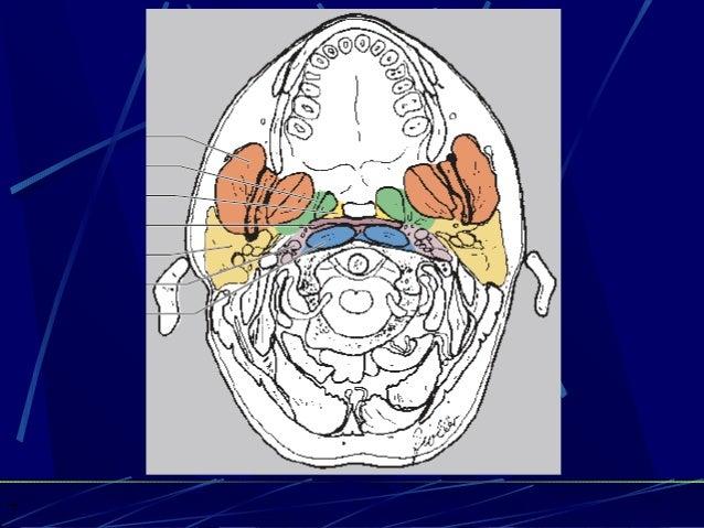 Anatomy of neck spaces