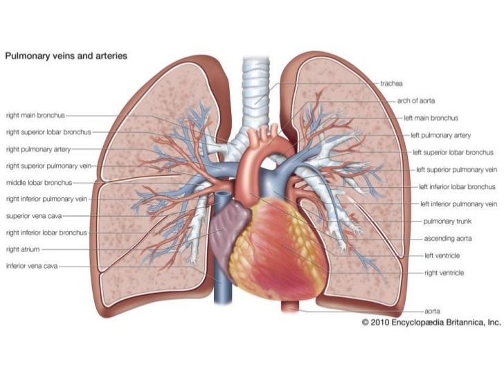 Ct Pulmonary Angiogram