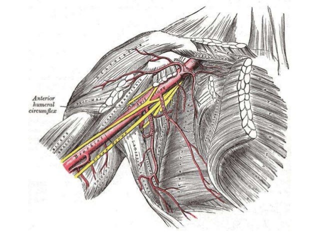 CARPAL TUNNEL SYNDROME ANATOMY AND RADIOLOGY IMAGING FINDINGS