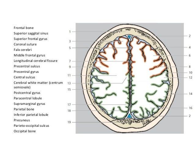 Ct Scan Head Basics