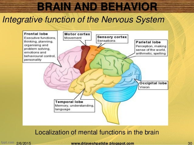 the brain and behavior essay 2 essay The nurse told michael that one theory holds that an imbalance of neurotransmitters, or chemical messengers of the brain, occurs in depression neurotransmitters influence the individuals emotions, thoughts, and subsequent behavior.