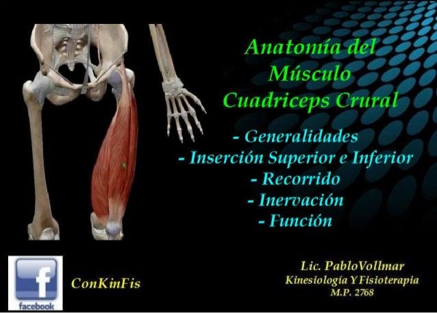 Anatomía del Cuadriceps