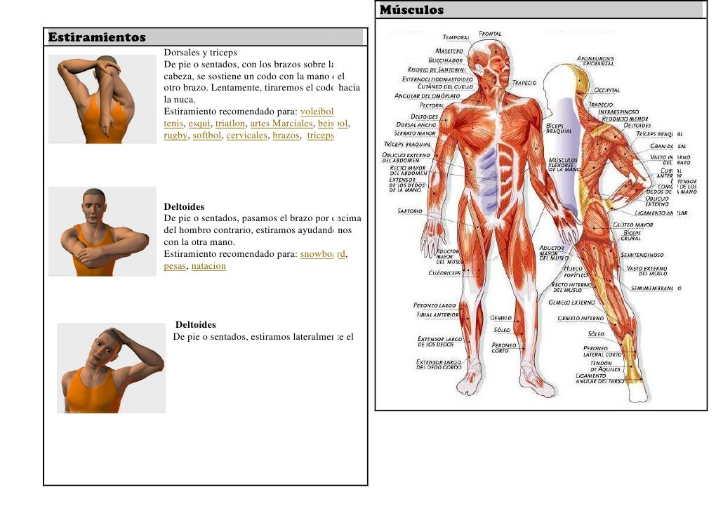 Fantástico Nombres Músculo Del Hombro Adorno - Imágenes de Anatomía ...