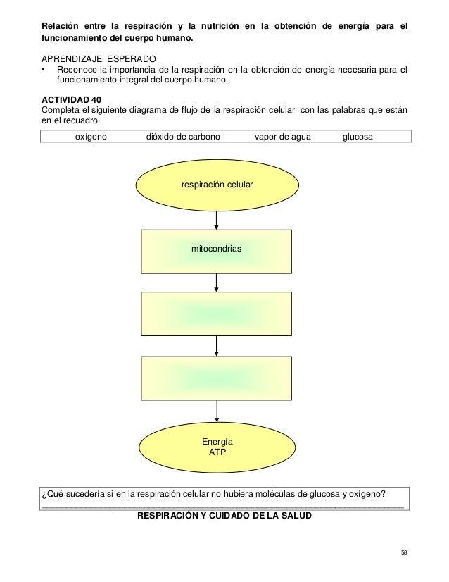 Cuaderno de actividades para el fortalecimiento de los aprendizajes C…