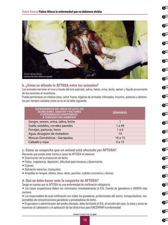 17 Salud Animal Fiebre Aftosa la enfermedad que no debemos olvidar CUADERNOS GANADEROS 12 Mientras llega el ICA, tenga en ...