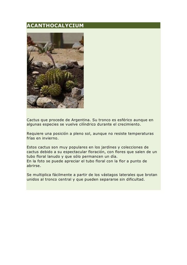 Cuaderno plantas jard n mediterr neo for Plantas jardin mediterraneo