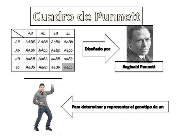 Cuadrados De Punnett