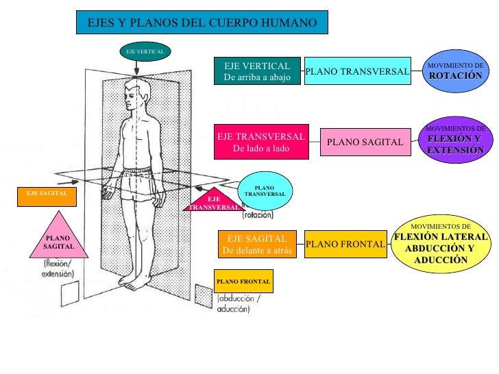 Resultado de imagen de ejes planos y movimientos corporales
