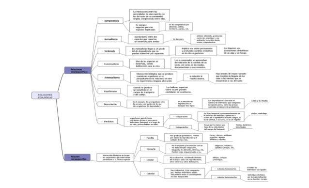 Cuadro sinóptico - Relaciones ecológicas