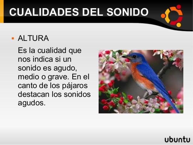 CUALIDADES DEL SONIDO  ALTURA Es la cualidad que nos indica si un sonido es agudo, medio o grave. En el canto de los pája...