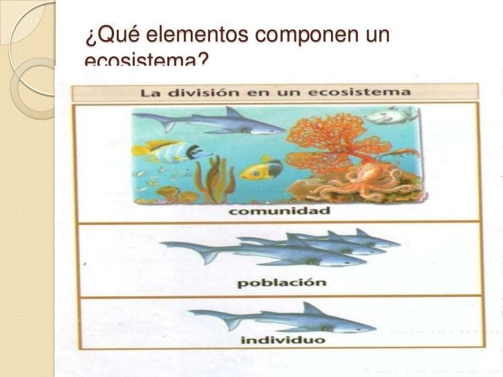 Ecosistemas cadenas alimentarias nicho ecol gico for Que elementos conforman el suelo