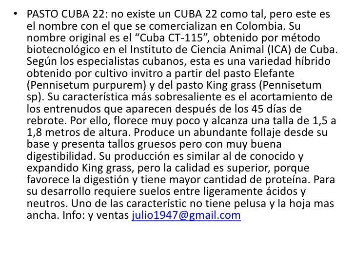 PASTO CUBA 22: no existe un CUBA 22 como tal, pero este es el nombre con el que se comercializan en Colombia. Su nombre or...