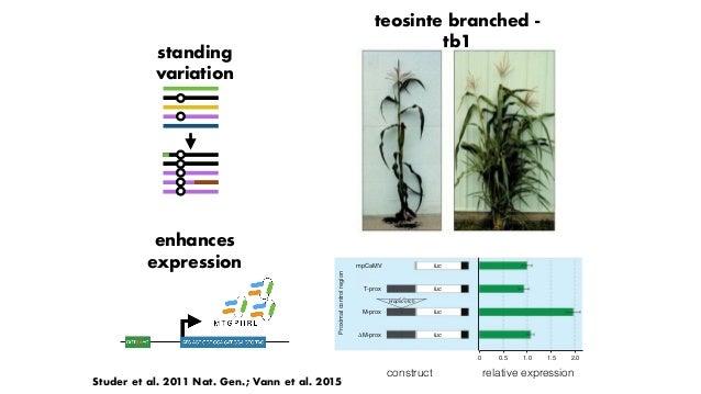 Makarevitch et al. 2015 PLoS Genetics