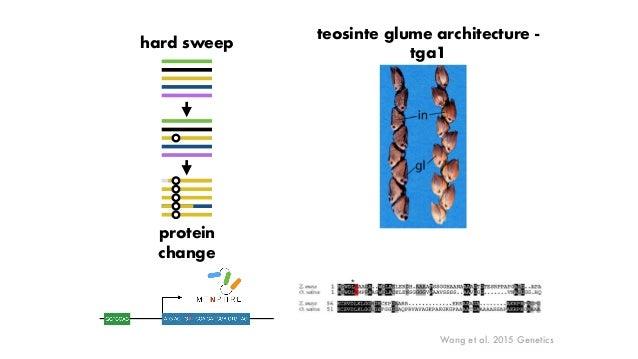 Makarevitch et al. 2015 PLoS Genetics single TE family many genes