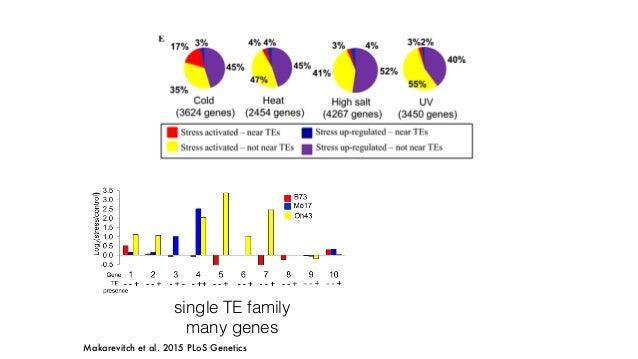 Doebley 2004, Studer et al., 2011 tb1 Hopscotch