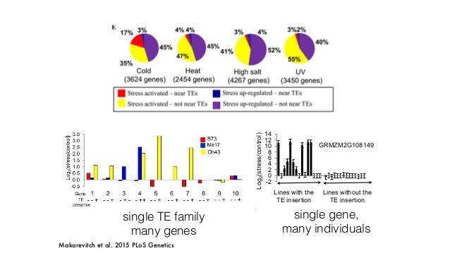 Doebley 2004, Studer et al., 2011 tb1 Hopscotch ZmCCT CACTA Yang et al., 2013