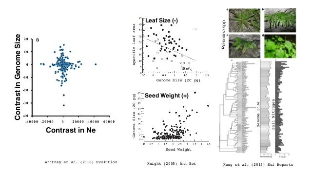 Kang et al. (2015) Sci Reports GenomeSize SoilNitrogen Seed Weight (+) Leaf Size (-) Knight (2005) Ann Bot Primulinaspp. G...
