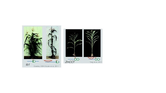 Genome size and adaptation in plants
