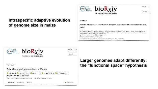 """Larger genomes adapt differently: the """"functional space"""" hypothesis Intraspecific adaptive evolution of genome size in maize"""