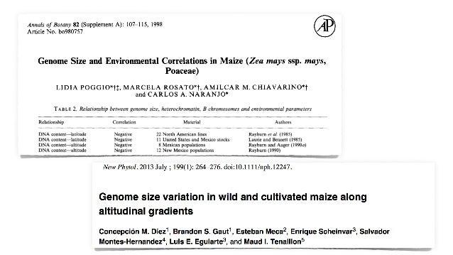 Z. mays ssp. parviglumis Z. mays ssp. mexicana Pyhäjärvi et al. (2013) GBE
