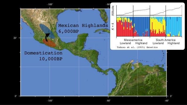 Domestication 10,000BP Mexican Highlands 6,000BP S. American lowlands 6,000BP Takuno et al. (2015) Genetics Lowland K=3K=4...