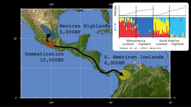 Domestication 10,000BP Mexican Highlands 6,000BP S. American lowlands 6,000BP Andes 4,000BP Takuno et al. (2015) Genetics ...