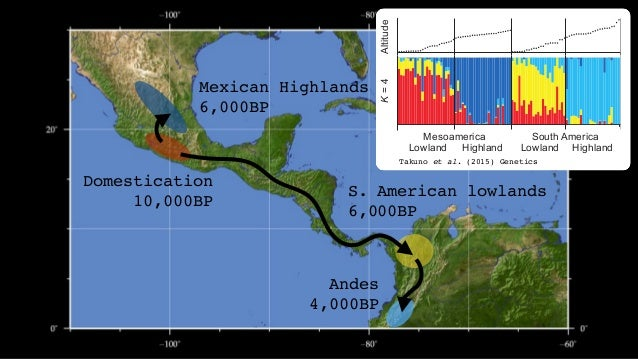 altitude GenomeSize(Mb) 77 landraces S. America Mexico parviglumis mexicana teosinte altitude3250 3125 3000 2875 2750