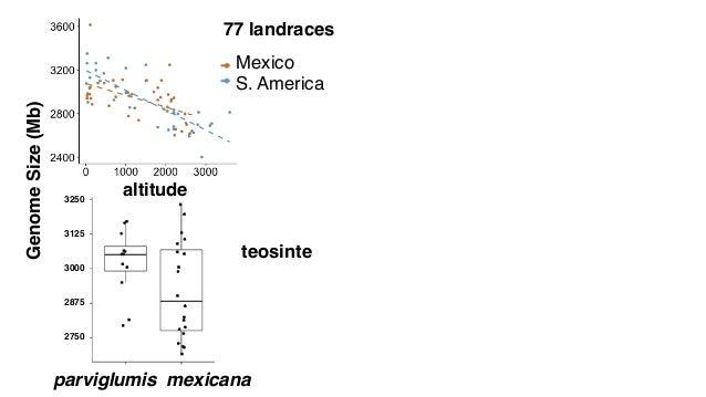 altitude GenomeSize(Mb) 77 landraces S. America Mexico teosinte 95 mexicana altitude