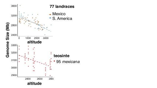 altitude GenomeSize(Mb) 77 landraces S. America Mexico teosinte 95 mexicana altitude genome size (bp) #individuals h2~0.9