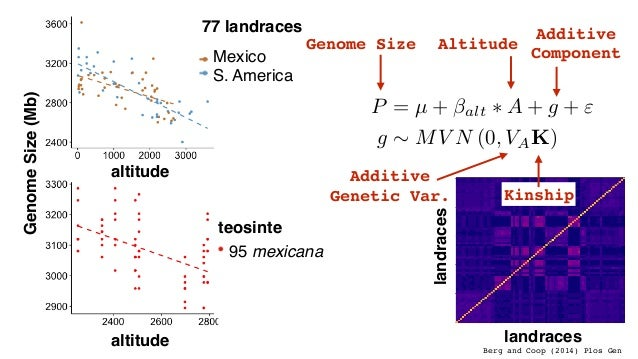 "altitude GenomeSize(Mb) 77 landraces S. America Mexico teosinte 95 mexicana altitude P = µ + alt ⇤ A + g + "" g ⇠ MV N (0, ..."