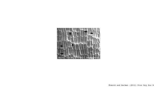 Leaf Elongation (LER) Cell Size (CS) Cell Production (CP) Genome Size (GS) + - Šímová and Herben (2012) Proc Roy Soc B Wal...