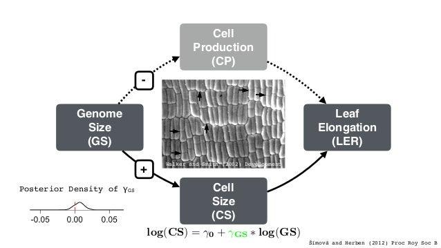 Leaf Elongation (LER) Cell Size (CS) Cell Production (CP) Genome Size (GS) + - log(LER) = ⌧0 + ⌧GS ⇤ log(GS) log(CS) = 0 +...