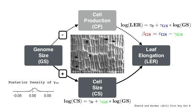 Leaf Elongation (LER) Cell Size (CS) Cell Production (CP) Genome Size (GS) + - log(CP) = 0 + GS ⇤ log(GS) log(LER) = ⌧0 + ...