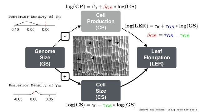 Leiboff et al. (2015) Nat Comm cell number (cell division rate)floweringtime growth stage