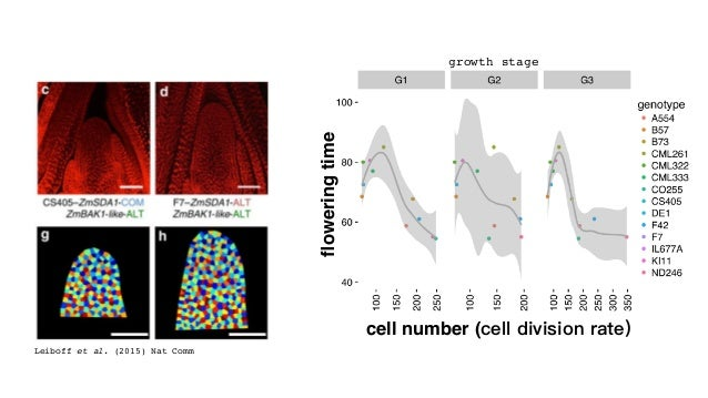Tenaillon et al. (2016) PeerJ leafelongationrate genome size early-flowering flints late-flowering tropical