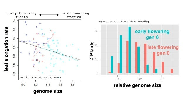 large small GENOME SIZE