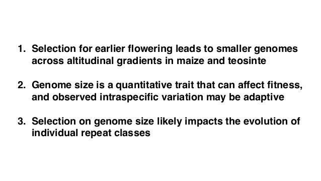 """Intraspecific adaptive evolution of genome size in maize Larger genomes adapt differently: the """"functional space"""" hypothesi..."""