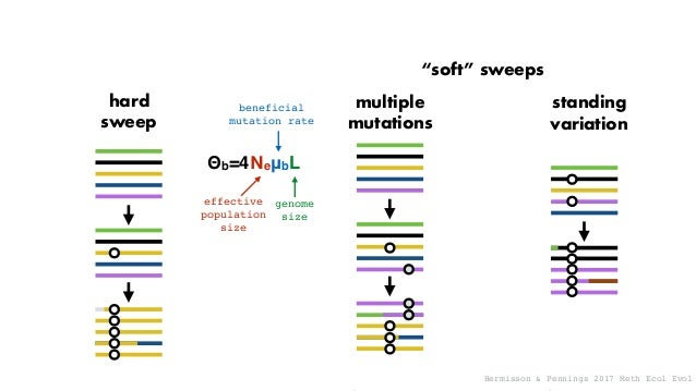 """hard sweep multiple mutations standing variation """"soft"""" sweeps Θb=4ΝeμbL beneficial mutation rate genome size effective po..."""