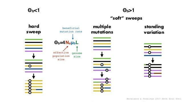 Beissinger et al. 2016 Nature Plants nucleotidediversity distance to nearest substitution (cM) prediction: bigger genomes ...