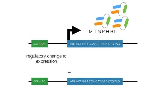 Hufford et al. 2012 Nat. Gen. Chia et al. 2012 Nat. Gen maizeteosinte prediction: bigger genomes have more intergenic adap...