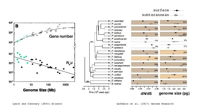 Lynch and Connnery (2003) Science Lefébure et al. (2017) Genome Research genome size (pg)dN/dS surface subterannean