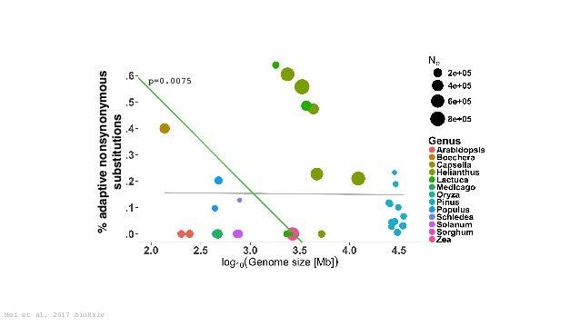 Doebley 2004, Studer et al. 2011 tb1 Hopscotch ZmCCT CACTA Yang et al. 2013 plant architecture flowering time