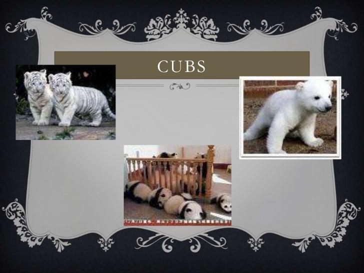 Cubs<br />