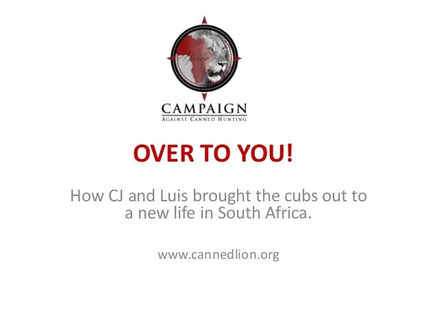 OVER TO YOU!  How CJ and Luis brought the cubs out to  a new life in South Africa.  www.cannedlion.org