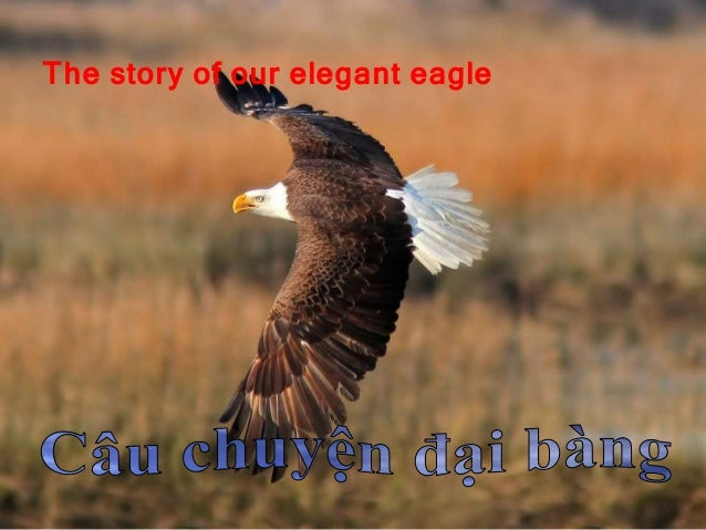 The story of our elegant eagle